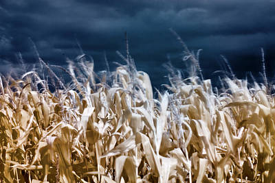 Photograph - Corn Field by Helga Novelli