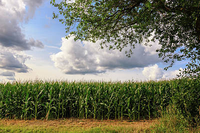 Photograph - Corn Field On A Cloudy Day by Joni Eskridge