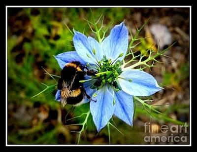Photograph - Corn Flower  by Joyce Woodhouse