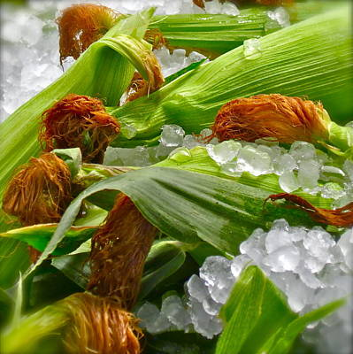 Ear Of Corn Photograph - Corn For Sale by Gwyn Newcombe
