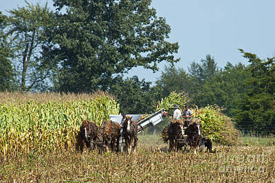 Amish Photograph - Corn For Sialge Two by David Arment