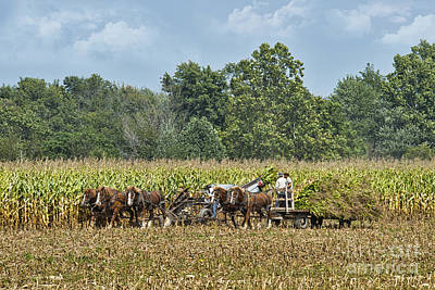 Amish Photograph - Corn For Silage by David Arment