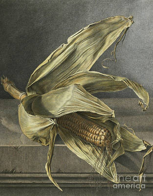 Pantries Painting - Corn by Gerard van Spaendonck