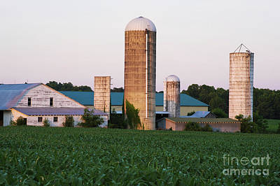 Photograph - Corn In The Field by Patrick M Lynch