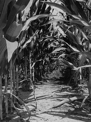 Photograph - Corn by Jeff Montgomery