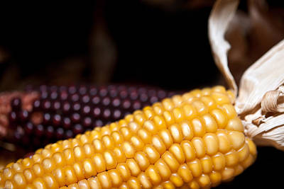 Photograph - Corn by Johnny Sandaire