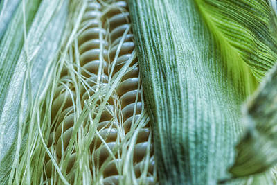 Photograph - Corn by Jonathan Nguyen