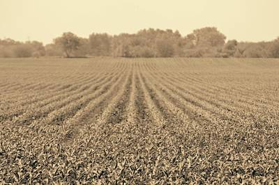 Photograph - Corn Landscape by Photography by Tiwago