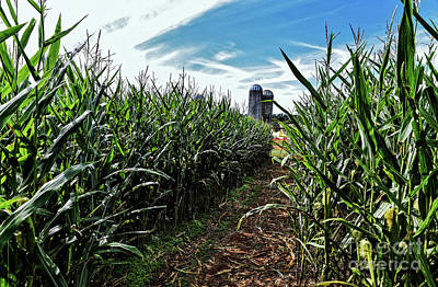 Photograph - Corn Maze by Paul Mashburn