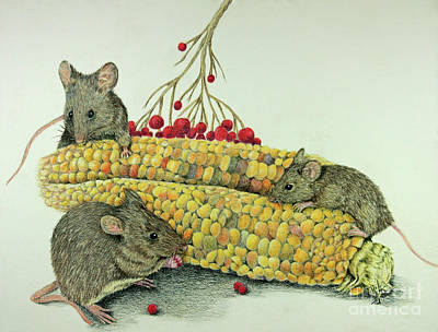 Drawing - Corn Meal by Terri Mills