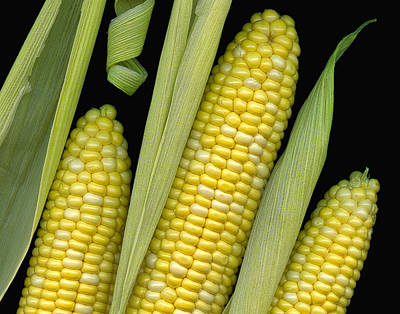 Scanography Photograph - Corn On The Cob I  by Tom Mc Nemar