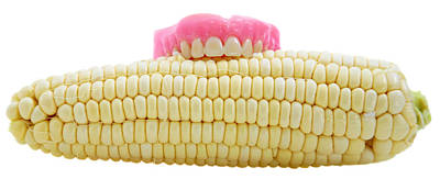 Ears Of Corn Photograph - Corn On The Cob With False Teeth  by Michael Ledray