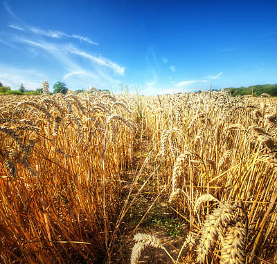 Wheat Field Sky Photograph - Corn Rield by Haaghun