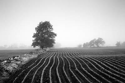 Photograph - Corn Rows by CA  Johnson