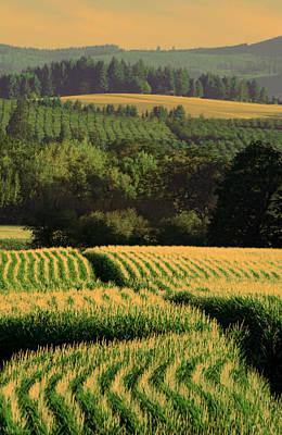Photograph - Corn Rows by Don Schwartz