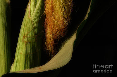Photograph - Corn Silk by Linda Shafer