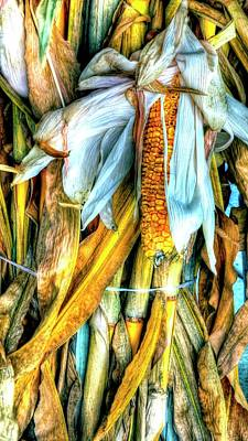 Photograph - Corn Stalks And Ear by Jerry Sodorff