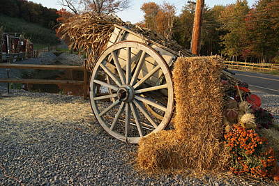 Photograph - Corn Stalks And Hay Bales by Margie Avellino