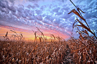 Photograph - Corn Sunset 5 by Bonfire Photography