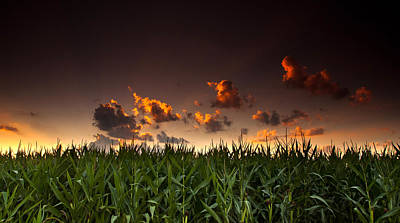Corn Sunset Art Print by Cale Best