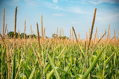 Photograph - Corn Tassels by Anthony Doudt