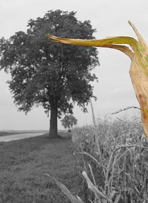 Photograph - Corn Tree by Dylan Punke