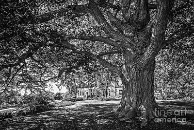 Iowa Photograph - Cornell College Landscape by University Icons