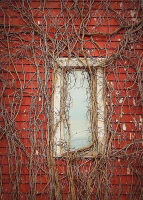 Corner Of Wood And Vine Art Print by Karen Cook