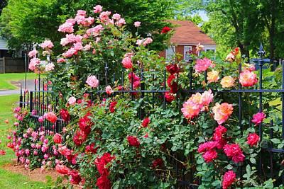 Photograph - Corner Rose Garden by Kathryn Meyer