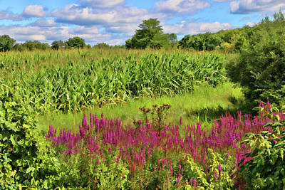 Corn Mixed Media - Cornfield And Purple Salvia by Allen Beatty