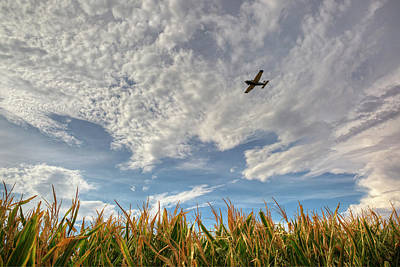 Photograph - Cornfield Flight by Sue Cullumber