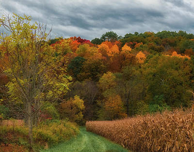 Photograph - Cornfield In Fall  by Richard Kopchock