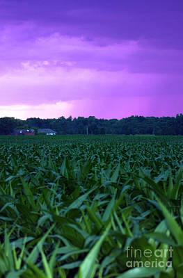 Cornfield Landscapes Purple Rain Art Print by Cathy  Beharriell