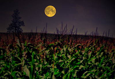Full Moon Photograph - Cornfield Moon Tree by Emily Stauring