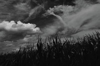 Photograph - Cornfield Noir by Photography by Tiwago