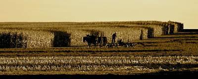 Photograph - Cornfield Shadows W.mule Team by Tana Reiff
