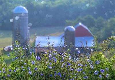 Photograph - Cornflower And Barn by Bernadette Chiaramonte