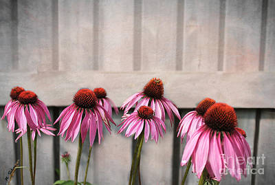 Photograph - Coneflower Couples by Nina Silver