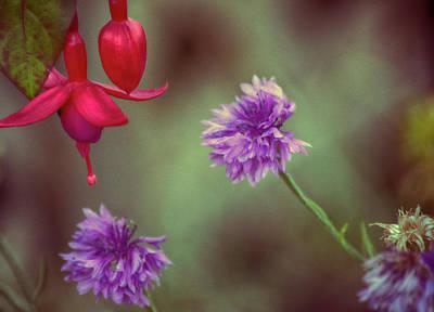 Cornflowers And Fuschia Art Print by Bonnie Bruno