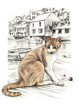 Drawing - Cornish Cat by Johanna Pieterman