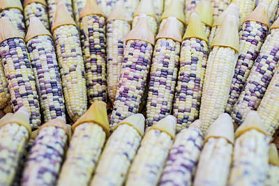 Corns  Art Print by Jingjits Photography