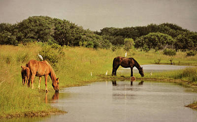 Photograph - Corolla Ponies by JAMART Photography