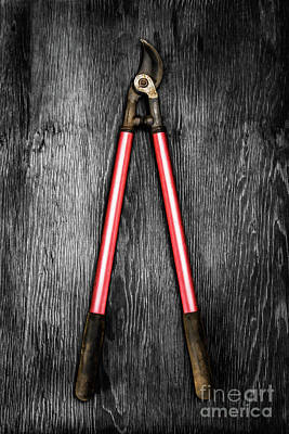 Photograph - Corona Loppers On Bw Wood by YoPedro