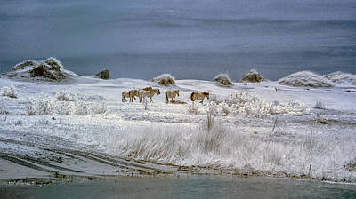 Photograph - Corrola Wild Horses by Gordon Ripley