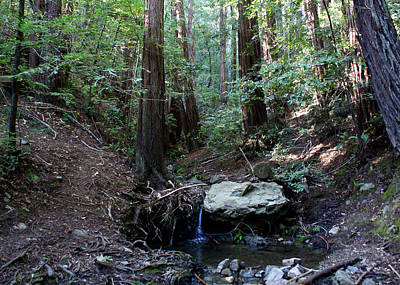 Photograph - Corte Madera Creek by Ben Upham III