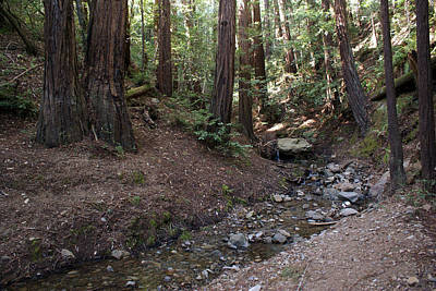 Photograph - Corte Madera Creek On Mt Tamalpais #2 by Ben Upham III