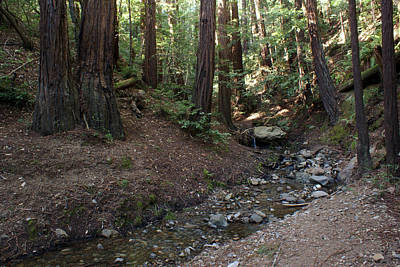 Photograph - Corte Madera Creek On Mt Tamalpais #3 by Ben Upham III