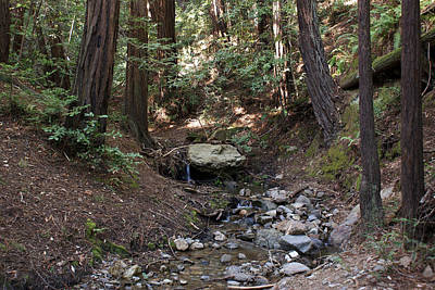 Photograph - Corte Madera Creek On Mt Tamalpais #4 by Ben Upham III