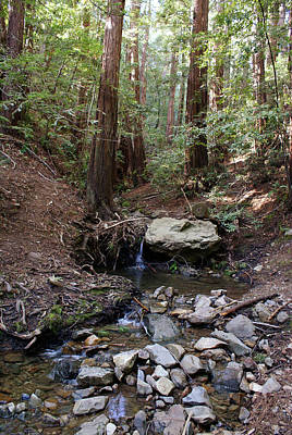Photograph - Corte Madera Creek On Mt Tamalpais #5 by Ben Upham III