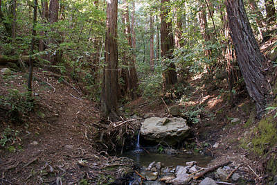 Photograph - Corte Madera Creek On Mt Tamalpais #6 by Ben Upham III
